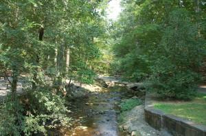 Arlington Forest (14)
