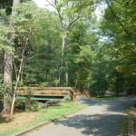 Arlington Forest (12)